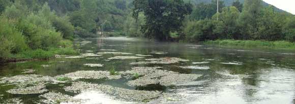 ribnik-august