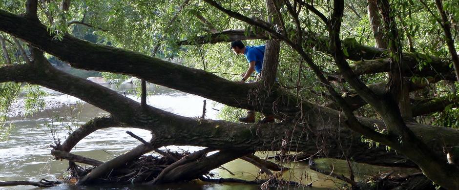 Huchen im kleinen Fluss